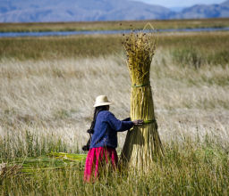 Donna peruviana nei campi